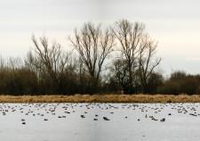 Borgfelder Wümmewiesen