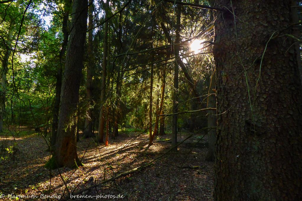 im Wald am Hexenberg
