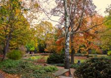 Focke Garten im Herbst